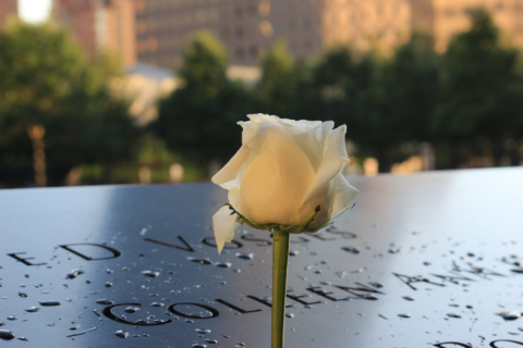 White rose in front of black memorial